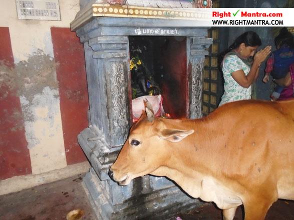 Pradhosha Urchavam 3