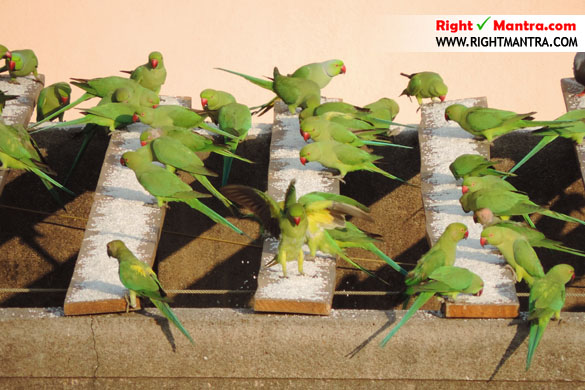 Parrots Sekar sir