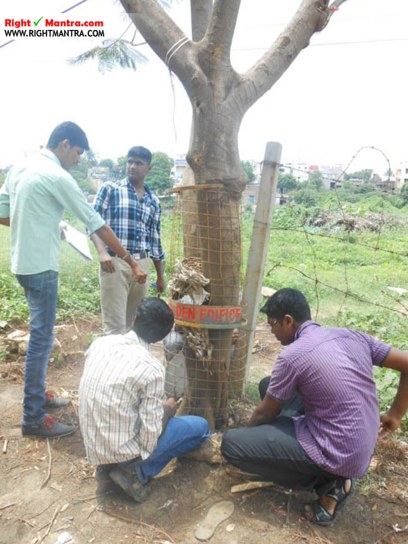 Tree Bank Mullaivanam 22