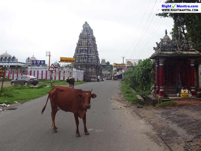 Rightmantra Deepavali Abishekam 1