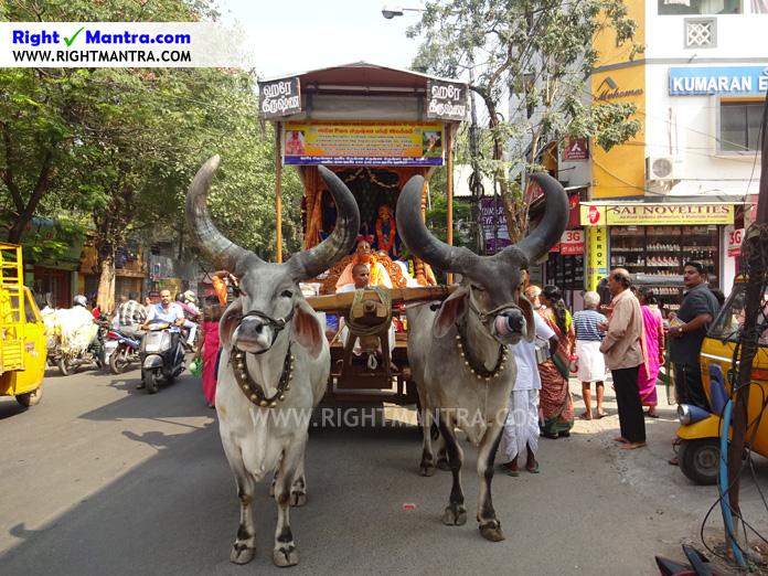 Hare Krishna Bullock Cart 1