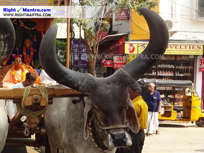 Hare Krishna Bullock Cart 9