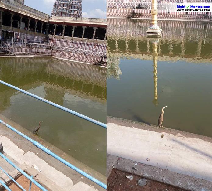 Madurai Temple Naarai