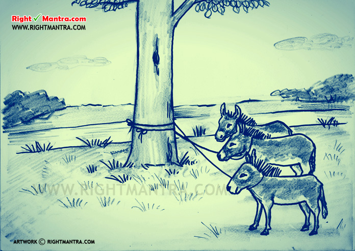 Untied Donkey