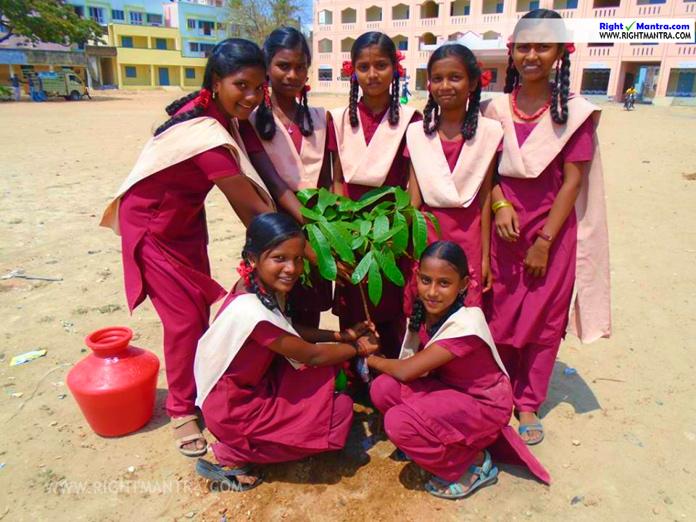treebank mullaivanam free tree sapling