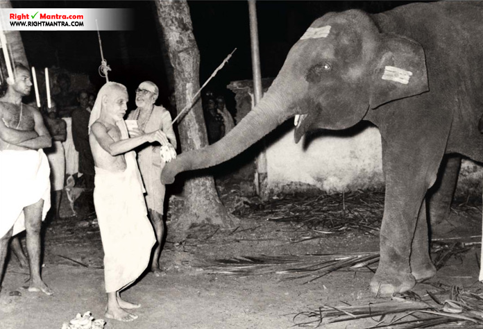 Periyava with elephant
