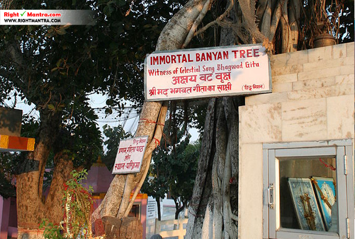 Jyothisar Banyan tree